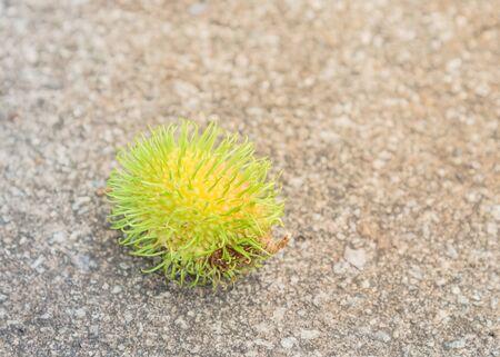 Single green rambutan (or nephelium lappaceum) fruit on concrete floor near tropical garden in Singapore