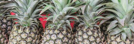 Panoramic organic green pineapple with leaves at street market