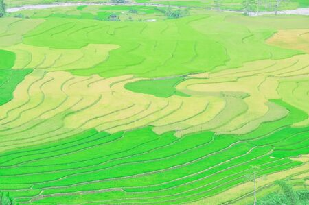 Famous terrace field with ripe and green rice and small creek in background at Mu Cang Chai, Yen Bai, Viet Nam