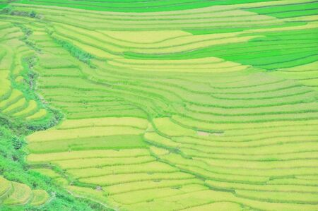 Aerial view terrace field with curved lines and resemble steps in Mu Cang Chai, Yen Bai, Viet Nam Stockfoto
