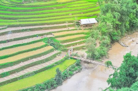 Creek side area with wooden house, bamboo cable stayed bridge and ethnic people harvesting terrace rice field in North Vietnam