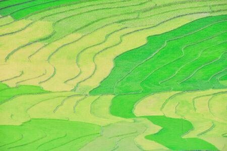 Aerial view terrace field with curved lines and resemble steps in Mu Cang Chai, Yen Bai, Viet Nam Stock fotó