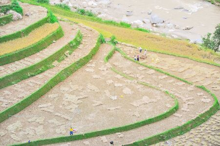 Ethnic people harvesting rice crops from terrace field near large creek in Mu Cang Chai, Yen Bai, Vietnam Stock fotó