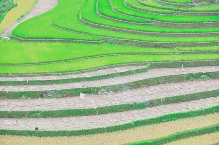 Terrace field with mix of green, yellow and after harvest rice meadow in Mu Cang Chai, Yen Bai, Vietnam