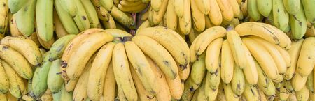 Panoramic abundance of banana bunches at fruit stand in Geylang, Singapore