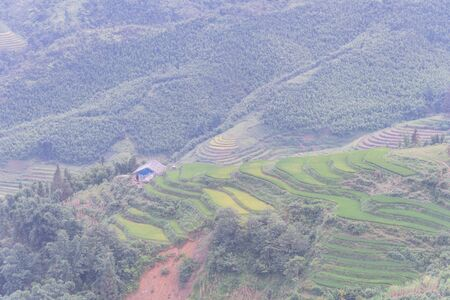 Aerial lush green terrace rice field with wooden slum house in Sapa, Northern Vietnam