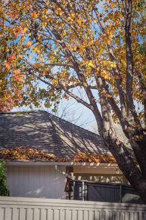 Lookup view pile of dried leaves on rain gutter of residential house at fall season in Texas, USA