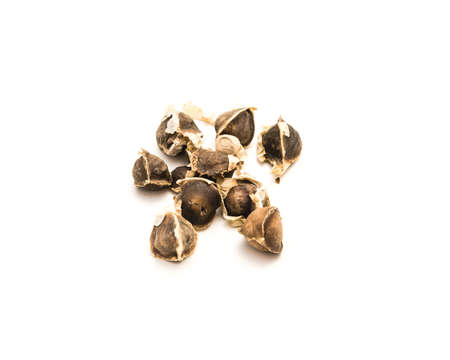 Group of unpeeled and kernel of Moringa (Moringa oleifera) seeds isolated on white background. Homegrown unpeeled drumstick (horseradish, ben oil, benzolive) seeds ready for planting Imagens