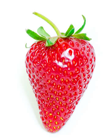 Homegrown strawberry with long stem isolated on white background, copy space and clipping path. Fresh harvested homegrown strawberry fruit.