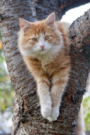 purr: Cat looks forward sitting on the tree close up outdoor Stock Photo