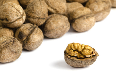 Walnuts on white background with shadow close up
