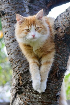 Red cat sitting in a tree  close up Archivio Fotografico
