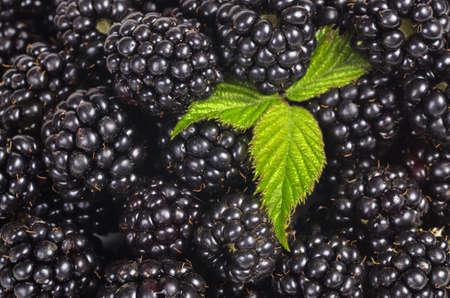 Blackberry and leaf close up Archivio Fotografico