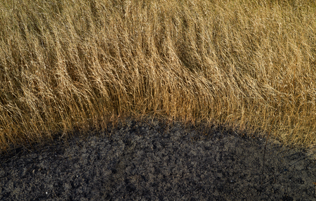 Dry grass and burnt earth daylight