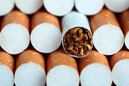 Tobacco in cigarettes with brown filter close up Archivio Fotografico