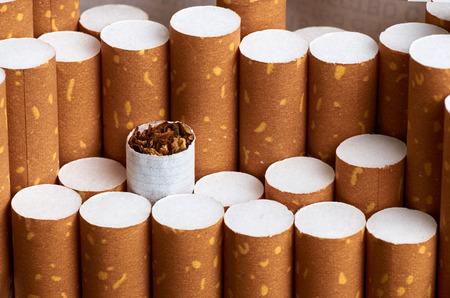 Tobacco in cigarettes with brown filter Archivio Fotografico