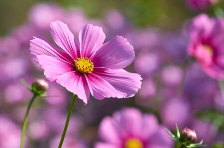 Beautiful autumn flower close up