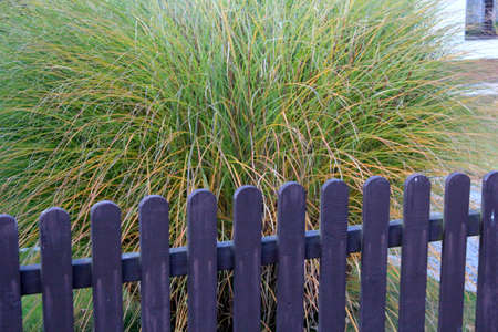 ornamental grass behind the fence