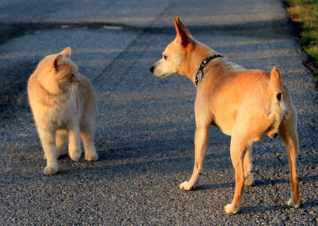 dog and cat-new friends photo