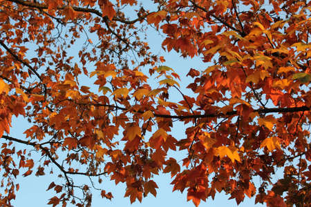 colorful autumn leaves trees Stock Photo