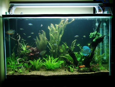 Planted Nature Aquarium featuring an Amazon River Biotope