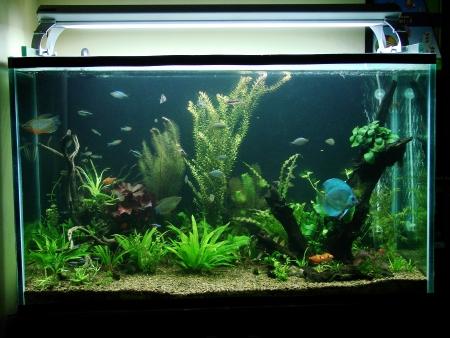 Planted Nature Aquarium featuring an Amazon River Biotope Stock Photo - 17164135