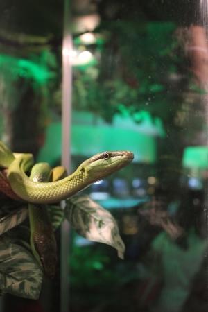 Tree Snakes