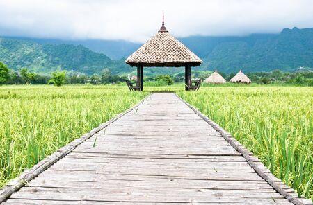 hut  in Green rice field in Thailand photo