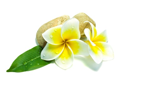 Frangipani on white background . an originate flower in asia.