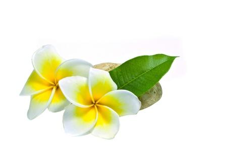 Frangipani on white background . an originate in asia. Stock Photo