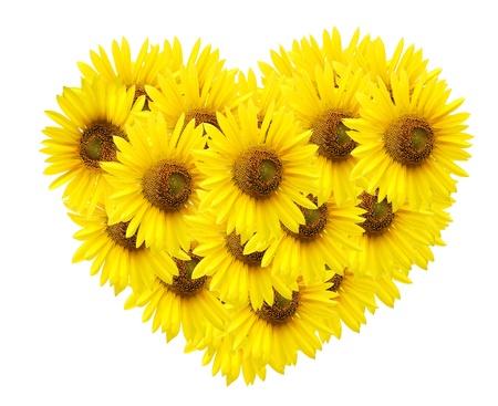 design of sunflower  isolated on white.