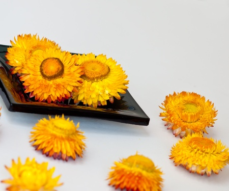 essences: flower on black ceramic bowl in spa  conceps.