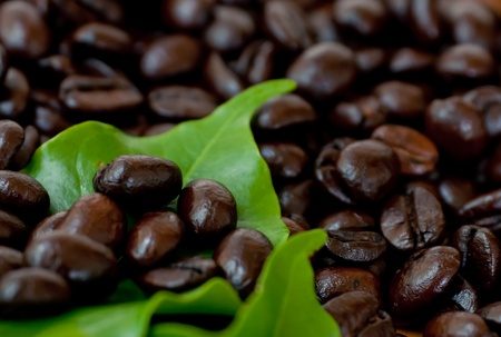 Roasted coffee  beans and coffee leaf  on wood texture. Stock Photo - 13452516