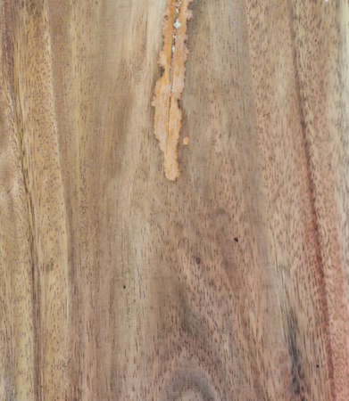 Grunge texture of wood background  photo