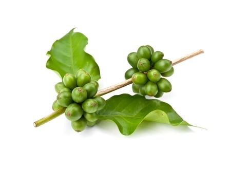 granos de cafe: caf� en grano y hojas sobre fondo blanco