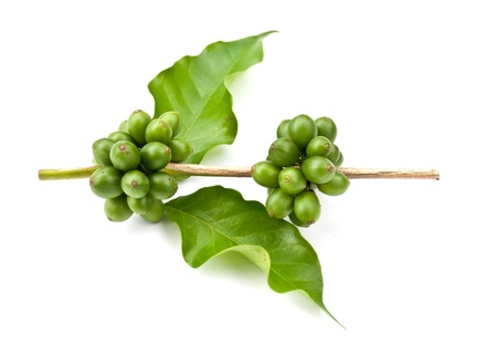 coffee beans and leaf on white background