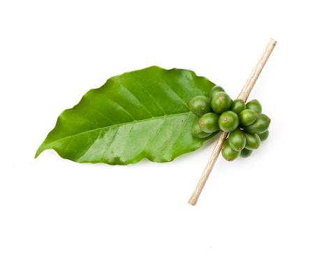 granos de café y hojas sobre fondo blanco