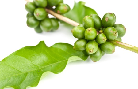coffee beans and leaf on white background Stock Photo - 14395572