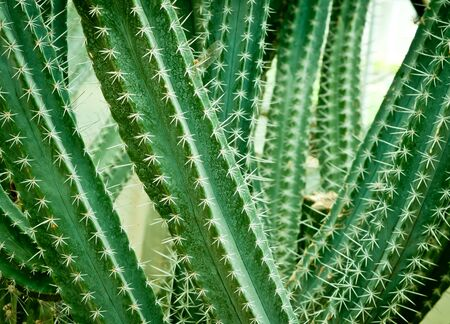Close up of cactus in vigget style . photo