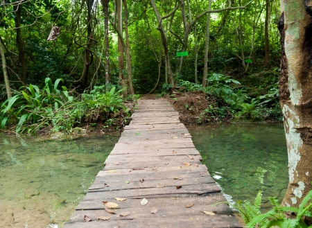 wood bridge to the waterfall  in forest  photo