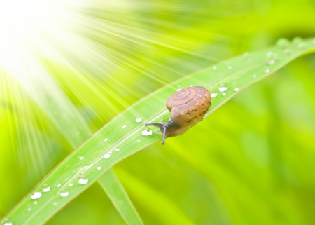 snail sitting on the dewy grass  photo