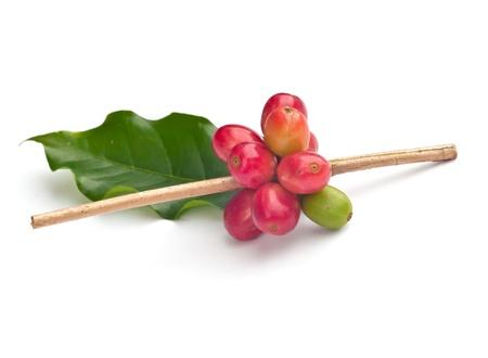 Red beans: Hạt cà phê chín trên nền trắng
