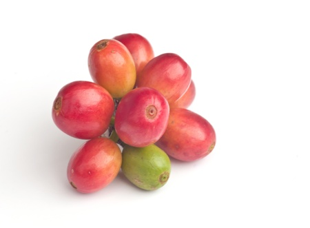 Ripe coffee beans on white background