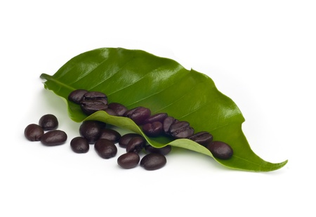 coffee beans  with leaf Isolated  on white background  photo