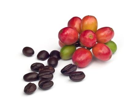 frijoles rojos: granos de caf� y el caf� maduro rojo aislado sobre fondo blanco