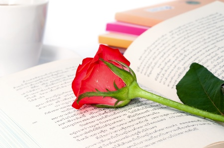 Red rose on the  book in thai language. photo