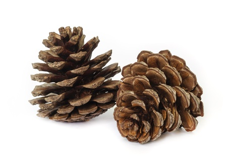 Pine cones isolated on white background. photo