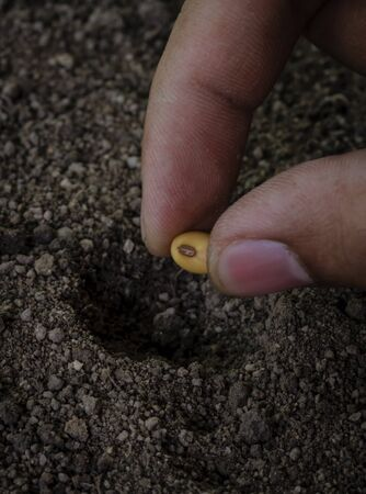 seedling of soybean in the ground Stock Photo - 20468503