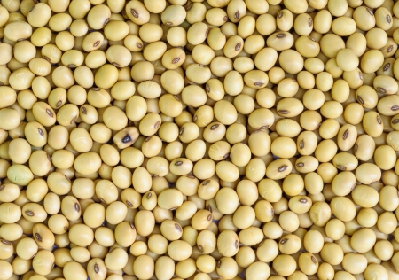 Closeup of soy beans  background.