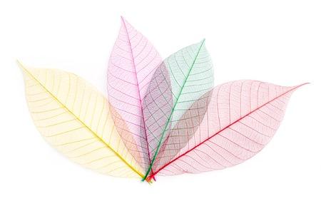 Getrocknete Farbe Blatt Transparent Isoliert Auf Weiß. Lizenzfreie ...